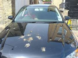 car_birds_ok